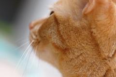 Dog cat (kevin dooley) Tags: dog cat canon sigma