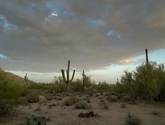 Uncivilized (LilBtch) Tags: sunset clouds cacti desert az mesa saguaros zd14542835 olympuse620 bibble5pro userymountainparkrd