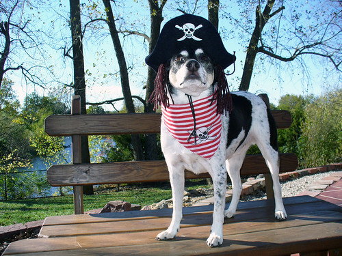 2007-10-19 - Peedee the Pirate - 0011