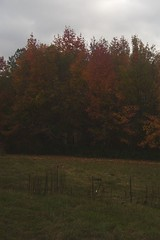 111207 Fall Color