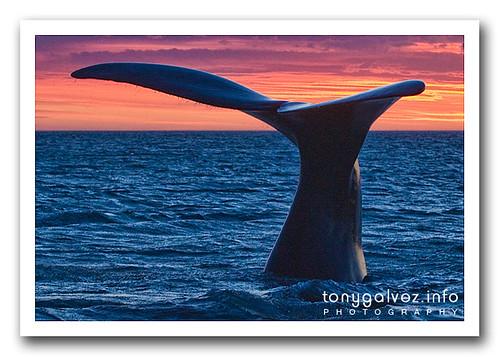Santuario de ballenas del Atlántico Sur