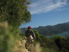 (B A Hockman) Tags: newzealand sun bike freedom ride riding views nz mtb ontheroad touring onthetrail queencharlottesound singletrack queencharlottetrack onyerbike marlboroughexploration