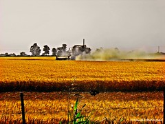 Cosechando trigo / Harvesting wheat 002 (Claudio.Ar) Tags: santafe topf25 argentina field yellow wheat sony 100v10f explore amarillo campo fv10 soe dsc trigo h9 smrgsbord naturesfinest blueribbonwinner vob cruzadas supershot top20colorpix 35faves golddragon shieldofexcellence anawesomeshot flickrplatinum diamondclassphotographer flickrdiamond theperfectphotographer goldstaraward photosexplore landscapesdreams goldcruzadas claudioar claudiomufarrege gmofreewheat