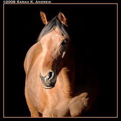 Welcome Winter (Rock and Racehorses) Tags: portrait horse eye wizard january nj 25 d200 2008 sunbeam onblack awesomeshot alibar supershot magicdonkey anawesomeshot flickrplatinum lovingpetownersrule betterthangood