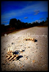 Bone Road (Chrissy Avila Photography (cHrIsSy1554)) Tags: landscape photography offroad florida c © squared okaloacoocheesloughstateforest ©csquaredphotography chrissy1554 ©christinaavilaphotography ©chrissyavilaphotography wwwchrissyavilaphotographycom