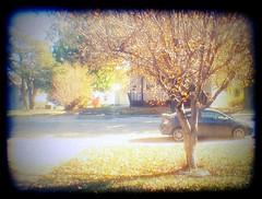 the view from the window (jesh1223) Tags: street autumn light tree fall car digital 35mm lomo picnik dumpr jesh1223