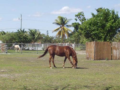 http://farm3.static.flickr.com/2123/2263972762_ac89cba2fe.jpg