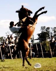 Perdendo a boina (Eduardo Amorim) Tags: brazil horses horse southamerica field brasil caballo cheval caballos campo cavalos pferde cavalli cavallo cavalo gauchos pferd riograndedosul pampa champ hest hevonen campanha brésil chevaux gaucho 馬 américadosul bagé fronteira häst gaúcho 말 campero amériquedusud лошадь gaúchos 马 sudamérica suramérica américadelsur סוס südamerika jineteada حصان άλογο camperos americadelsud gineteada ม้า americameridionale campeiros auffangen campeiro eduardoamorim ginetaço ঘোড়া