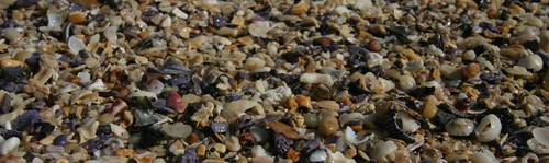 Shelly Beach Pebbles.