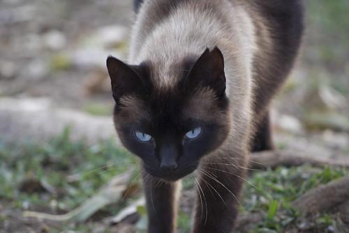 gato antes