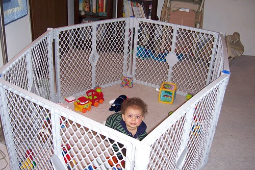 Monkey In His Cage
