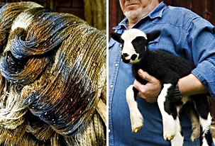 autumn hill farm  sheep farmers actually design their animals for the