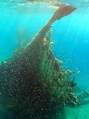 Unknown wreck in Sinai (vanveelen) Tags: nature underwater redsea egypt sharmelsheikh diving e300 wreck sinai