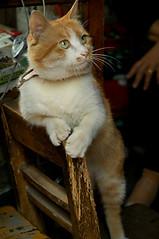 2008-0510-cat05