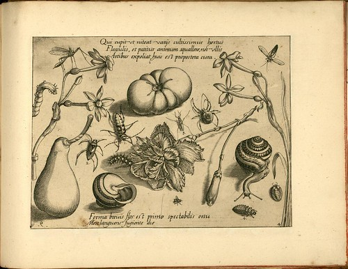 Archetypa studiaque patris - Joris Hoefnagel (1592) a