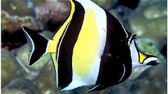 Scuba Diving Kenting, Taiwan