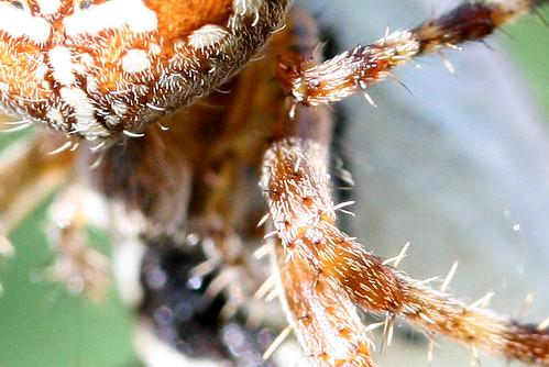 La poilue et ses poils