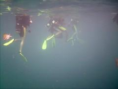 PICT0004 (JoseQ) Tags: blue mar hole great tiburones buceo caribe submarinismo tiburón