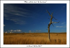 """Mon"" arbre sur le Larzac / ""My"" tree on the Larzac (Michel Seguret) Tags: original trees fab verde green nature catchycolors landscape fun nikon postcard vert ciel arbres 200 views sensational grn fabulous michel iq nuage paysage shiningstar naturesbest millau larzac causse the smrgsbord aveyron potofgold cartepostale midipyrenees occitanie otw seguret causses objektif excelent rouergue nikond200 thinkgreen baumen kartpostal ruralit golddragon diamondheart anawesomeshot colorphotoaward francelandscapes exemplaryshotsflickrsbest thisphotorocks dragongoldaward worldtrekker checkoutmynewpics spiritofphotography cielnuage qualitypixels grandscausses naturespotofgold photographersgonewild nikonflickraward nikonflickraward flickrverte oletusfotos momentdimagination croquenature panoramafotogrfico panoramafotografico doubledragonawards excelenceofphotographer excelenceofphotographeraward flickraward michelseguret"