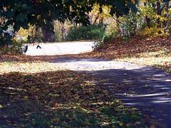 Leaves1007c