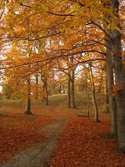 Autumn (kezwan) Tags: autumn blueribbonwinner kezwan impressionsexpressions anawesomeshot diamondclassphotographer