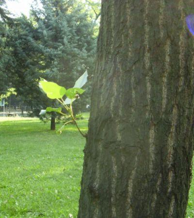 Лисго на дърво