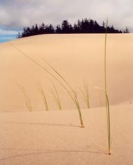 Sand Dunes (Loco Russo) Tags: nature oregon sand dunes dune tourist