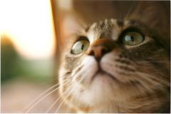 di un gatto è il Regno (bellimarco) Tags: portrait color animal cat canon gatto animali
