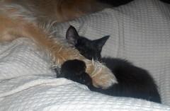 kitten & pup hugs