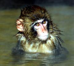 Monkey spa
