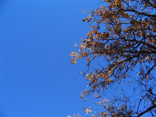 Colors dels arbres