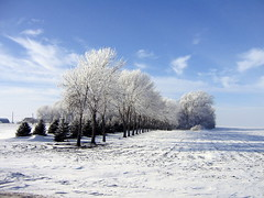 Hoarfrost at a Minnesota Farm Site (nkimadams) Tags: trees winter minnesota hoarfrost flickrsbest diamondclassphotographer flickrdiamond