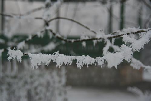 iarna in parc trei