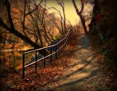 afternoon stroll (GGoddessS) Tags: park autumn fall nature strange forest landscape twilight bravo scenery pennsylvania path magic contest foliage trail moonlight unusual fairmount magical wissahickon cy2 challengeyouwinner mywinners goosegoddesss philaadelphia goosegoddess paulinabos