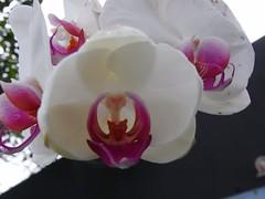 20080127225725999 (F7016385) Tags: flower taipeizoo 20070127