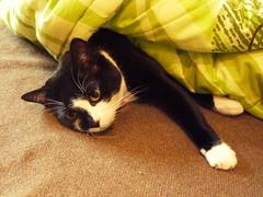 Black & White Cat (KLMircea) Tags: white black green cat eyes sleep kissablekat