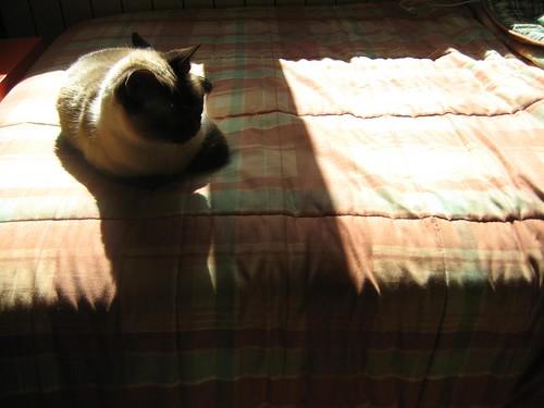 Olivia ó sol