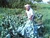 Fresh Cauliflower in Rajasthan (*Gaurav Atri*) Tags: noida india self nokia photo farm cauliflower farmer sikhs mybest photoart nokia6630 rajasthan bains uttarpradesh indianfarmer dholpur greenvegetable sonydscs600 photoartist raghuvir 13megapixil sikhfarmer gaurhavhatri gaurhav gauravatri jmagaurhav myfavoritephotoart