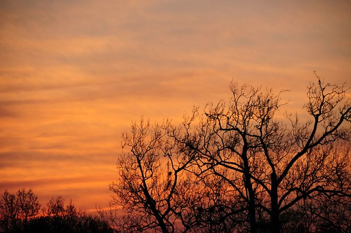 Black Tree Against Sunset