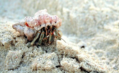 pagurone - hermit crab by motumboe.