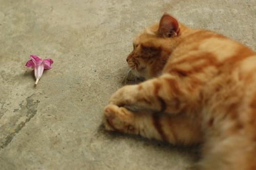 Cat and Petal