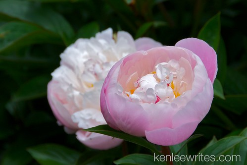 Ofuna Botannical Gardens  026