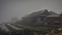 Mao's Place (Tinker & Rove) Tags: sapa hoàngliênson hmong village farm farmstead rural shed tinroof ricepaddy terraced wildflower mist fog travel adventure outdoors overcast southeastasia vietnam puddle mud himilayas cloudy moody