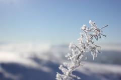 IMG_5218 (magicdeu1) Tags: döhlau bayern hof weinzlitz schnee sonne blume eis nebel windkrafträder windräder berge feld saale deutschland winter snow