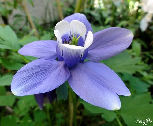 blog110523-jardin-02