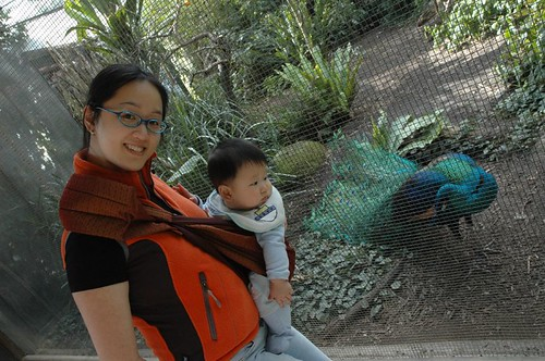 With the peacock