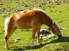 Wild horse (Valentina_A) Tags: wild fab horses horse nature animal free natura cavalli cavallo animali tearsandrain anawesomeshot diamondclassphotographer