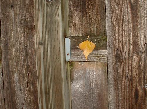 Fence Leaf