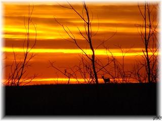 Autumn Sunset.......