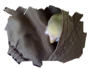 Kiki napping in Pocket